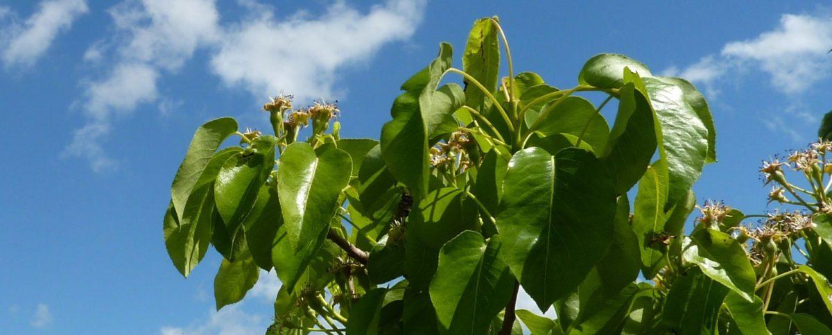 Vereecken Fruit Marknesse